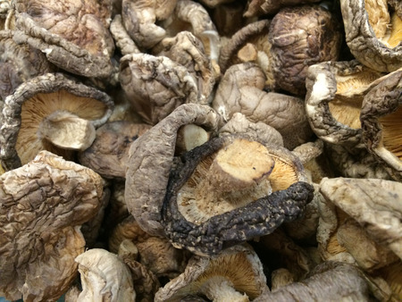 Dried Mushroom Background