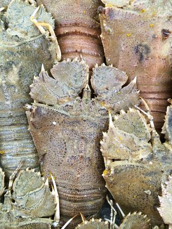 squeal: Mantis gamberetti in gruppo Archivio Fotografico
