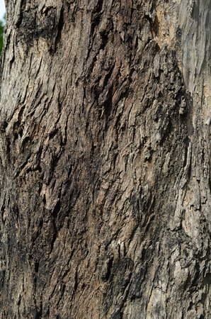 Tree trunk texture, pattern, background, wood pattern Stock Photo - 21783453