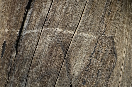 Tree trunk texture, pattern, background, wood pattern photo