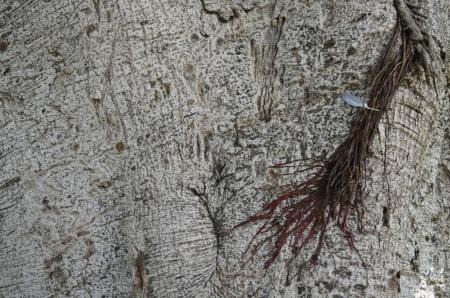Tree trunk texture, pattern, background, wood pattern photo