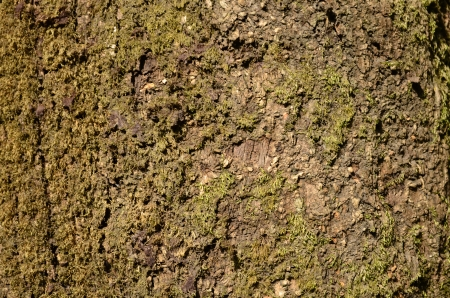 tree trunk background photo