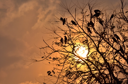 Tree with branches and birds sitting on it with pretty sunset and colorful sky in the backdrop photo