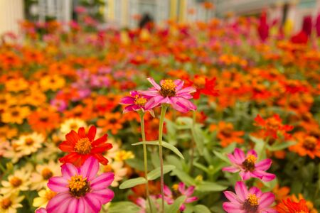 Stock Photo - a colourful beautiful flower Stock Photo - 14114425