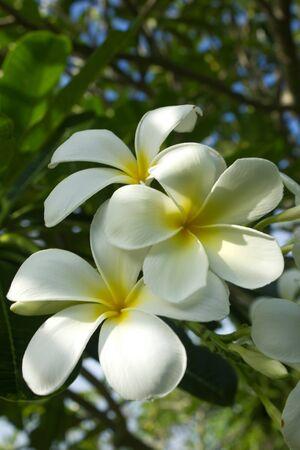 Stock Photo - summer field of beautiful yellow flower