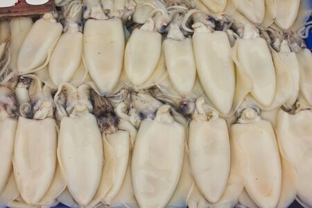 Stock Photo - Calamari or squid on a local fish market photo