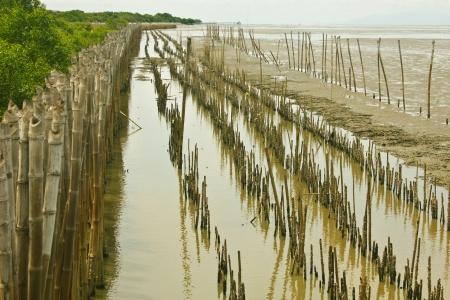 Bamboo dam and Mangrove farm photo