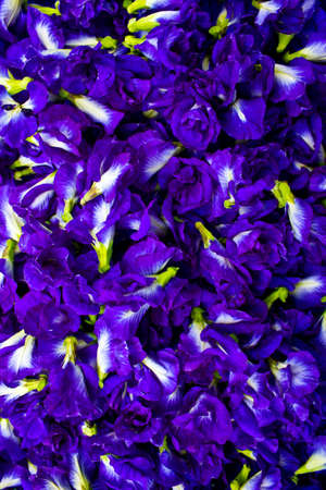 cathartic: Stock Photo - Purple flowers,Pea flowers  Stock Photo
