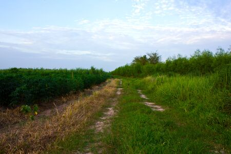 Stock Photo - road and field in countryside of thailand photo