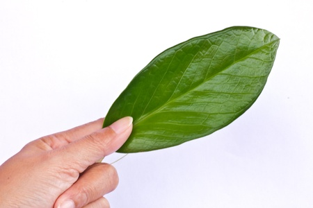 greengrass: Natural shaped leaves