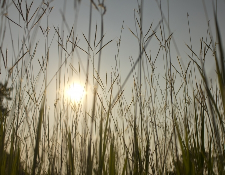 sun s: Bug s occhio di erba di campo con sole e cielo blu sullo sfondo Archivio Fotografico