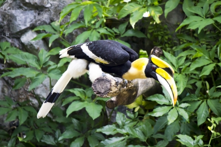 Stock Photo - A Portrait of a Hornbill Stock Photo