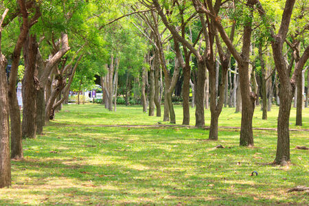 Summer thailand forest with walkway, green grass and trees photo