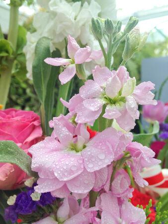 bouquet fleur: Photo - Gros plan d'un bouquet de fleurs Banque d'images