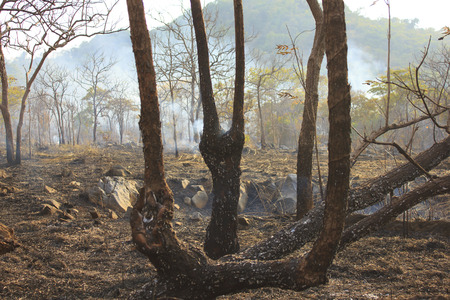 burnt out: An area of burnt out forrest smoulders after a bushfire