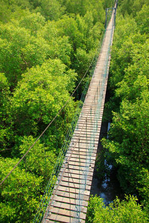 mangrove forest: Bridge across mangrove forest