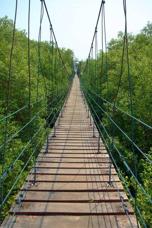 Bridge across mangrove forest photo