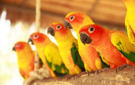 colorful parakeets photo