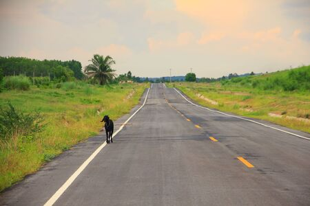 roadway: Straight roadway in a sunny day