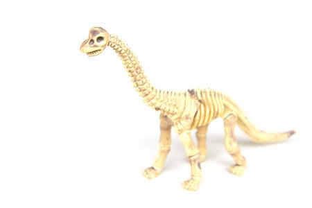 large skull: Dinosaur skeleton isolated on a white background Stock Photo