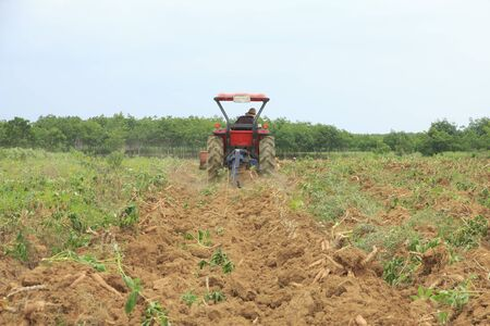 horticulturist: Farmer was drove tractor plowing the soil to harvest cassava