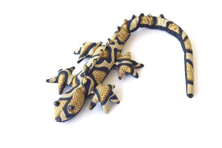 tokay gecko: Tokay gecko - Gekko gecko isolated on white backgroun Stock Photo