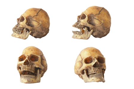 educational tools: Skull model set on isolated white background