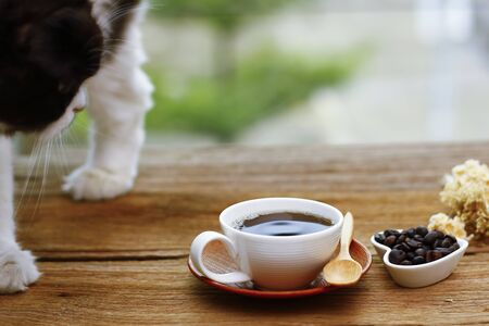 red cat sniffing a mug of black coffee while standing on a table with paper and pen