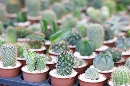Cactus Houseplant Collection Decoration Set Stock Photo