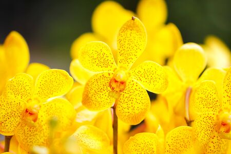 Ciérrese encima Flor de la orquídea de Phalaenopsis Orquídea en naturaleza Fondo floral Foco selectivo. Foto de archivo - 91626088