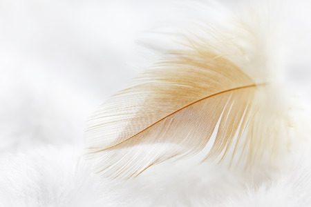 Some colored feathers for background or texture Standard-Bild
