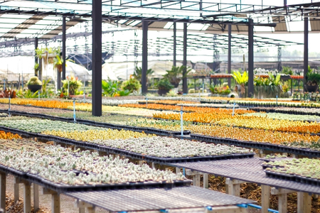 small cactus plants nursery for indoor decoration Stok Fotoğraf