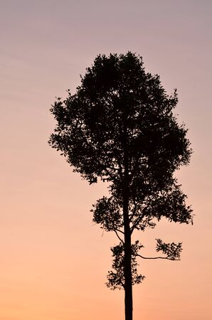 Silhouette of alone tree photo