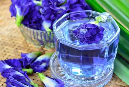 Herbal drinking with pea flowers photo