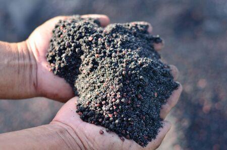 humus: Mixed of chemical fertilizer and humus Stock Photo