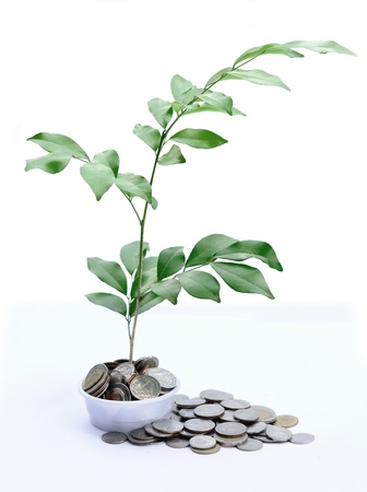 baht: Tree growing on baht coins Stock Photo