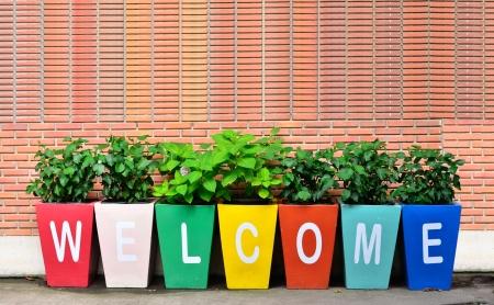 bienvenida: Colorido de la Bienvenida