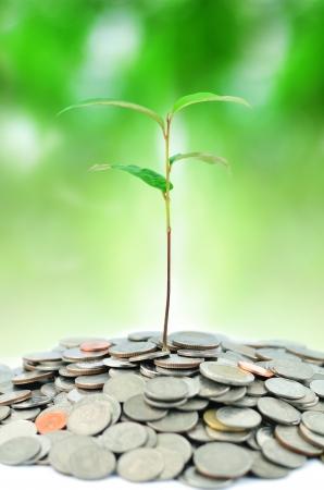 desarrollo econ�mico: planta en las monedas sobre fondo verde Foto de archivo