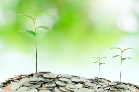 asian coins: tree growing on moneys Stock Photo