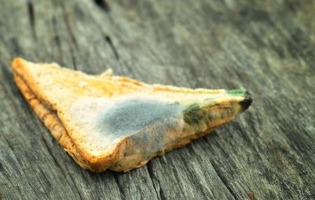 Moldy sandwich on wood background  photo