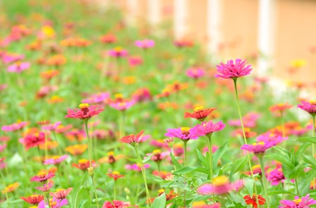 Colorful flowers in garden photo