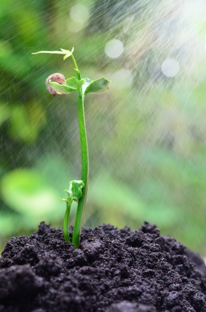 seedling growing: Tree growing over soil and rain