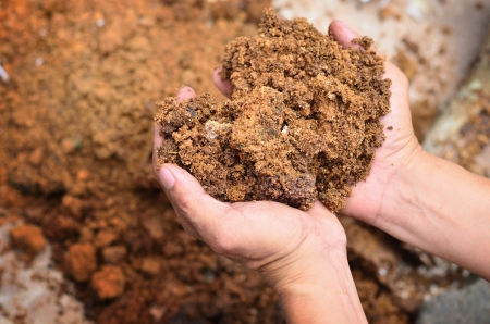 Material for compost on farmer hand Standard-Bild