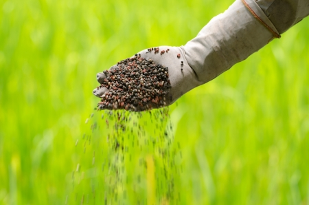 Organic fertilizer pouring with farmer hand Stock Photo