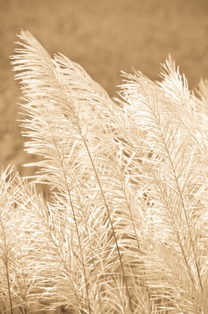 flower grass at relax morning time Stock Photo - 15809473