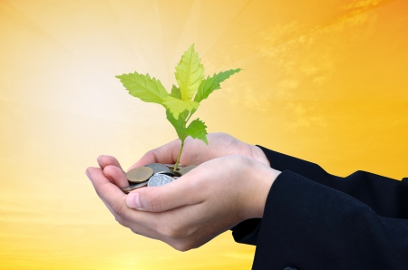 investor: Palms with a tree growing from pile of coins with gold background