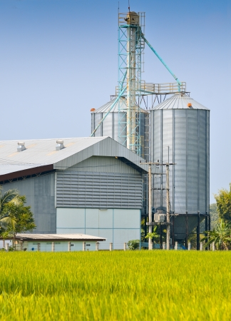 factory farm: Rice crop and Rice mill over blue sky Stock Photo