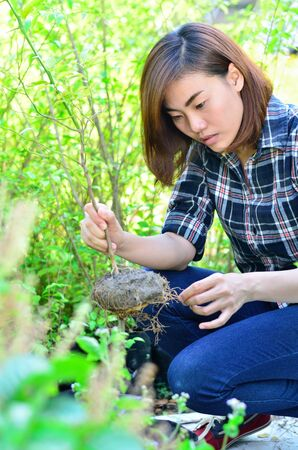 Asian women Checking Plant diseases 版權商用圖片 - 18257513