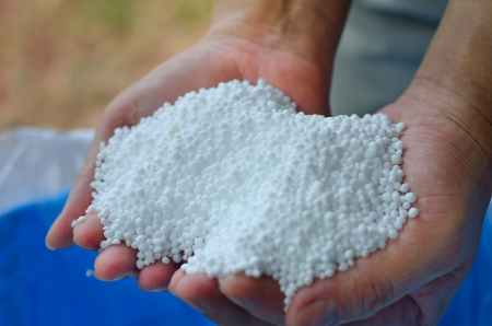 Urea,nitrogen chemical fertilizer on farmer hand Stockfoto