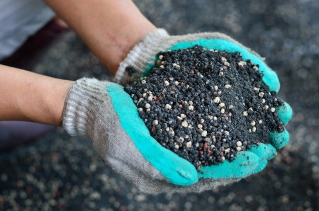 compost: The mix of plant chemical fertilizer and manure on farmer hands